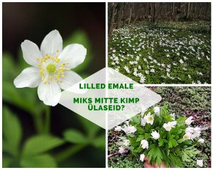Lilled emale